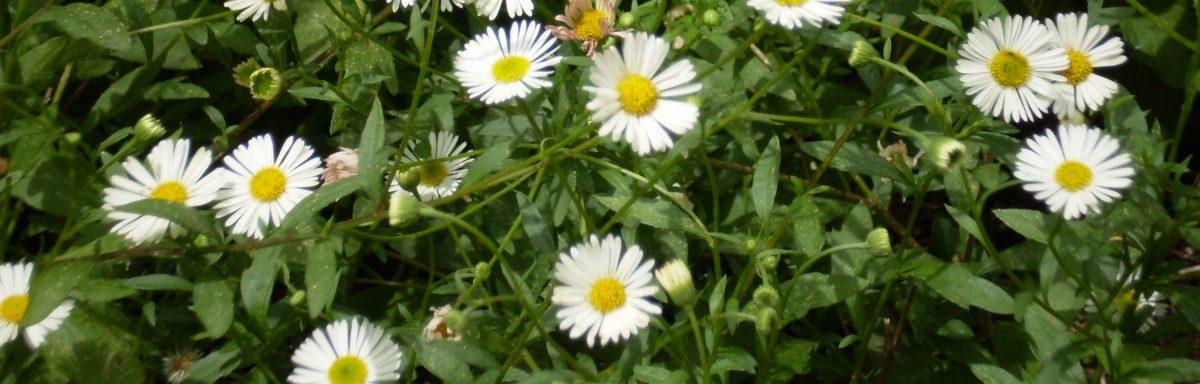 Essence Aromatherapy